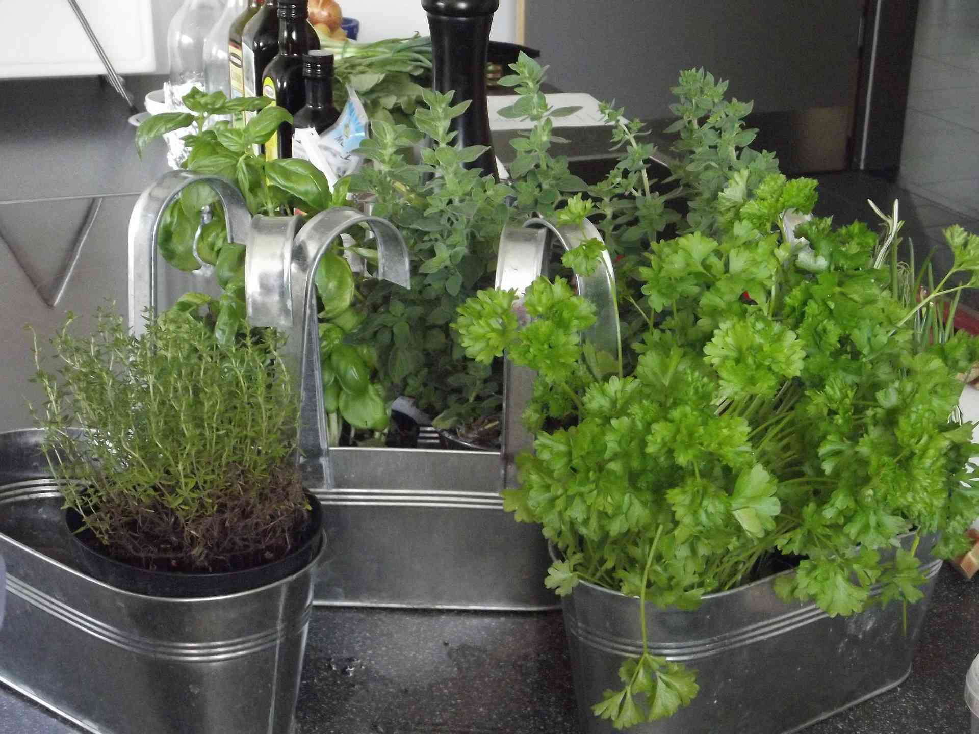 Aromatic Plants in the Kitchen
