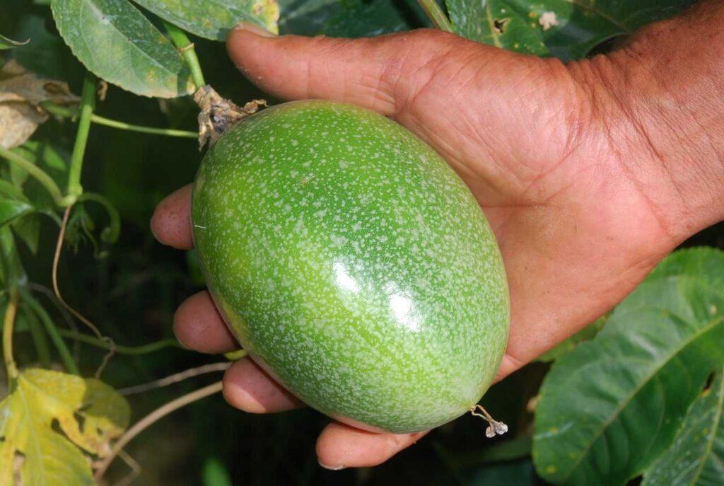 Fruit-abundant-potassium
